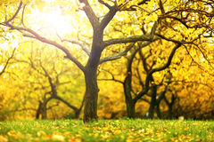 Autumn scene Royalty Free Stock Image