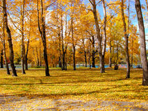 Autumn scene Royalty Free Stock Photo