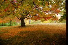 Autumn scene Stock Photography