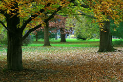 Autumn Scene. Stock Photography