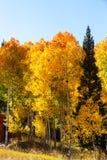 Autumn. Scene stock images