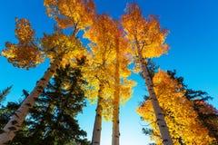 Autumn. Scene Royalty Free Stock Images
