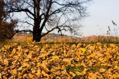 Autumn Scene Stock Photos