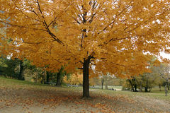 Autumn scene Royalty Free Stock Photo