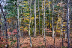 Autumn Scene Royalty Free Stock Photography