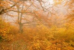 Autumn scene Stock Image