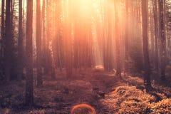 Autumn scene. Autumnal forest with sunlight. Stock Photos