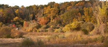 Autumn Scene av träd och fältet Royaltyfri Bild