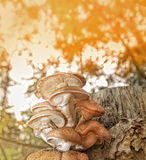 Autumn scene background Royalty Free Stock Photography