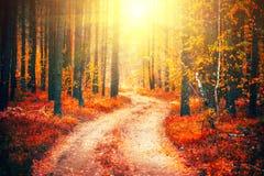 Autumn scene. Beautiful autumnal park with pathway Royalty Free Stock Photo