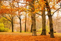 Autumn scene in Berlin with fallen leaves on the ground and trees losing their yellow and red leaves in the public park Tiergarten Stock Photography