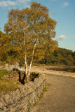 Autumn scene with a birch. Lakeside alley with a birch in bright sunny day Royalty Free Stock Images