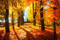 Free Autumn Scene. Bright Colorful Landscape Yellow Trees In Autumn Park. Fall Royalty Free Stock Photography - 144730057