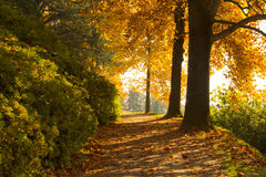 Autumn scene with colorful trees Stock Photos