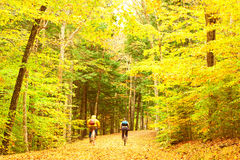 Autumn scene with cyclists Royalty Free Stock Images