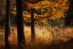 Autumn scene in a dark forest Royalty Free Stock Photos