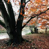 Autumn scene Great Driffield East Yorkshire England Royalty Free Stock Photography