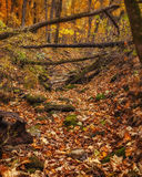 Autumn Scene - 4. A dry creek bed in the woods in Southeastern Minnesota Royalty Free Stock Photos