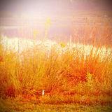 Autumn scene with dry grass Stock Image
