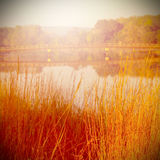 Autumn scene with dry grass Royalty Free Stock Photography