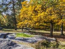 Autumn Scene en el bosque de Fontainebleau Imagen de archivo