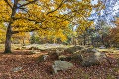 Autumn Scene en el bosque de Fontainebleau Fotografía de archivo libre de regalías