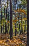 Autumn Scene en el bosque de Fontainebleau Imagen de archivo libre de regalías