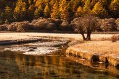 Autumn Scene en la reserva nacional de Yading Imágenes de archivo libres de regalías