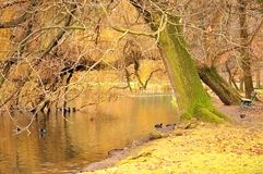 Autumn Scene with Fall Atmosphere. With bare trees and a lake with ducks Stock Photos