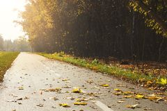 Fall scene at countryside road with golden trees and leaves royalty free stock photo
