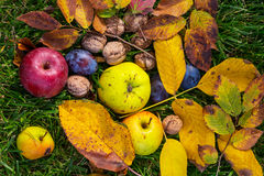 Autumn scene. Fall season scene with crop of fruits and walnuts in the garden. Beauty of the Autumn stock photos