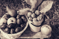 Autumn scene. Fall season scene with crop of fruits and walnuts in the garden. Beauty of the Autumn royalty free stock photo