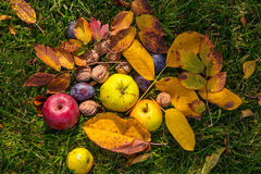 Autumn scene. Fall season scene with crop of fruits and walnuts in the garden. Beauty of the Autumn royalty free stock image