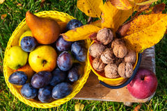 Autumn scene. Fall season scene with crop of fruits and walnuts in the garden. Beauty of the Autumn royalty free stock photos
