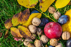Autumn scene. Fall season scene with crop of fruits and walnuts in the garden. Beauty of the Autumn royalty free stock images
