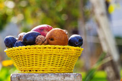 Autumn scene. Fall season scene with crop of fruits and walnuts in the garden. Beauty of the Autumn stock images