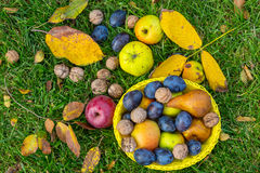 Autumn scene. Fall season scene with crop of fruits and walnuts in the garden. Beauty of the Autumn stock photo