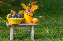 Autumn scene. Fall season scene with crop of fruits and walnuts in the garden. Beauty of the Autumn royalty free stock photography