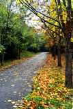 Autumn scene. Fall trees and leaves. After the summer, before winter, autumn Royalty Free Stock Images