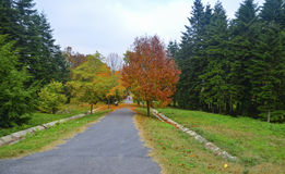 Autumn scene. Fall trees and leaves. After the summer, before winter, autumn Royalty Free Stock Image