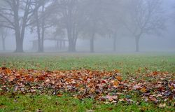Autumn scene. Royalty Free Stock Photo