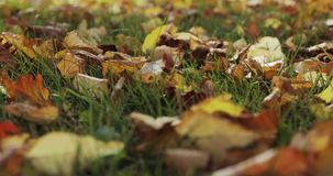 Autumn leaves falling and sun shining through fall leaves. Beautiful landscape background. stock footage