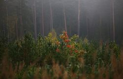 Autumn scene with fog and colored leaves. Autumn forest place with colored leaves and a fog stock images