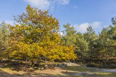Autumn Scene in Fontainebleau Forest. Beautiful fall landscape with colorful trees and rocks located in Fontainebleau Forest in Central France Stock Photography