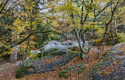 Autumn Scene in Fontainebleau Forest. Beautiful fall landscape with colorful trees and rocks located in Fontainebleau Forest in Central France Royalty Free Stock Photos