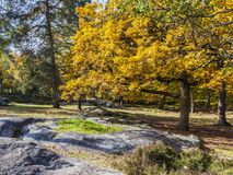 Autumn Scene in Fontainebleau Forest. Beautiful fall landscape with colorful trees and rocks located in Fontainebleau Forest in Central France Stock Image