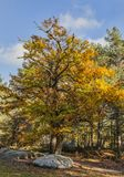 Autumn Scene in Fontainebleau Forest. Beautiful fall landscape with colorful trees and rocks located in Fontainebleau Forest in Central France Royalty Free Stock Images