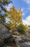Autumn Scene in Fontainebleau Forest. Beautiful fall landscape with colorful trees and rocks located in Fontainebleau Forest in Central France Stock Images