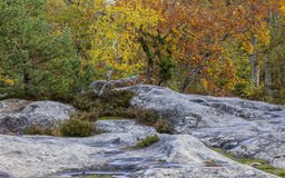 Autumn Scene in Fontainebleau-Wald Stockfoto