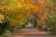 Autumn scene. Footpath covered with dry leaves autumn scene Stock Photo